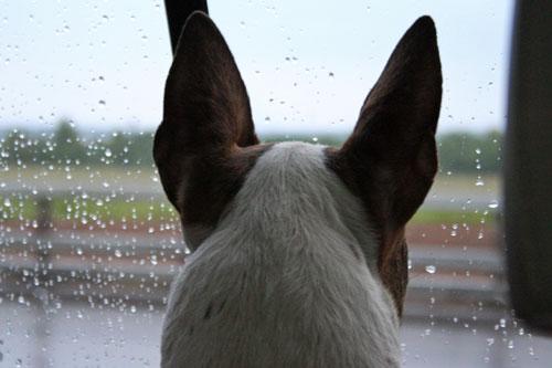 собакина грусть