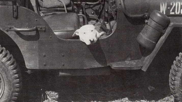 General George S. Patton's dog Willie