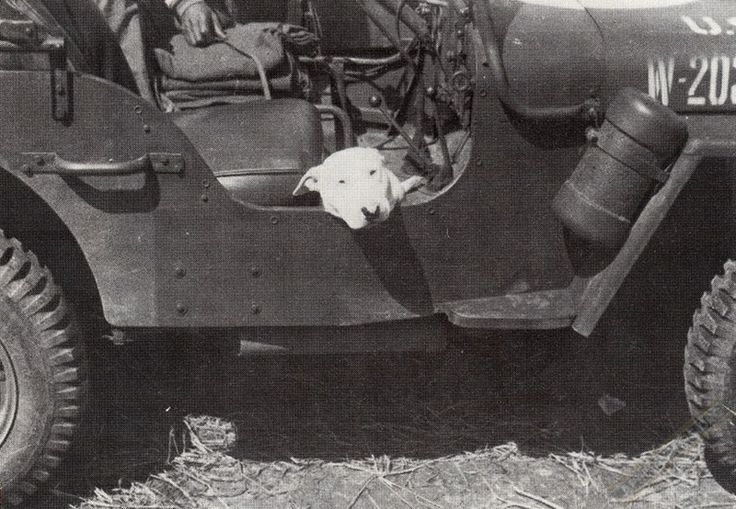 General George S. Patton's dog Willie