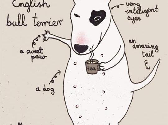 Чай с бультерьером