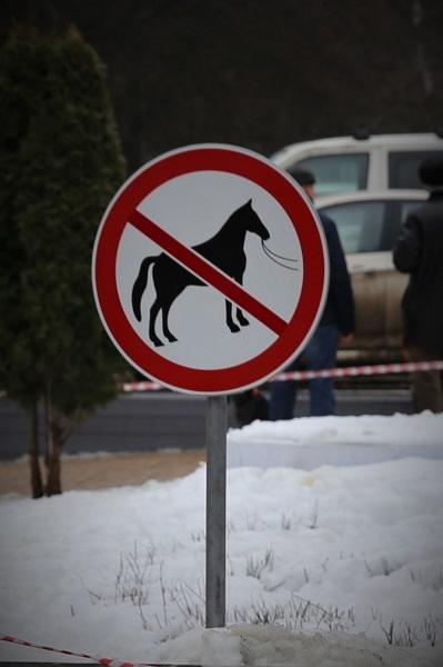 на выставку собак с лошадьми нельзя