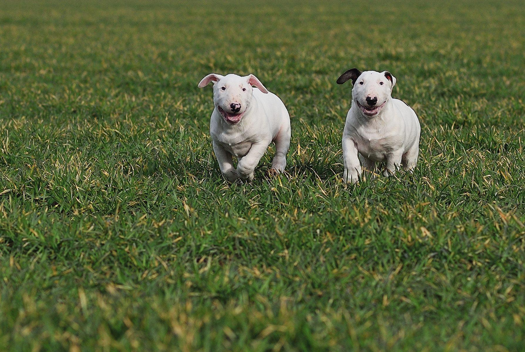 ТОП 10 самых популярных пород собак в США