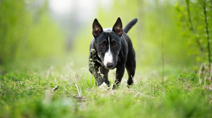Площадки для выгула собак в Москве