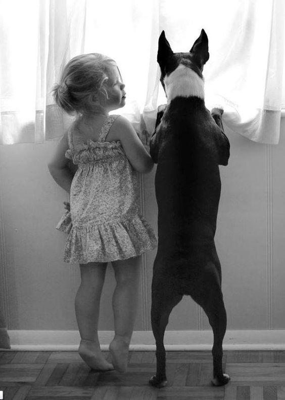 Дети и бультерьеры. Фото.